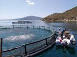Thành tựu đổi mới của ngành thủy sản
