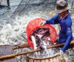 Góc nhìn thủy sản Việt