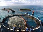 Chung tay hợp tác phát triển thủy sản
