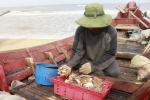 Thừa Thiên - Huế: Trúng vụ ghẹ giáp tết