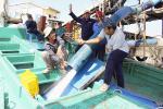 Bà Rịa - Vũng Tàu: Ngư dân phấn khởi mở biển