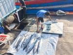 Mùa biển ấm no của ngư dân