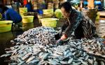 Trung Quốc: Hãng bán buôn thủy sản tươi sống thiệt hại nặng do coronavirus