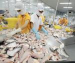 Cá tra Việt tìm cơ hội tại Mỹ