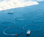 Trí tuệ nhân tạo (AI): Cách mạng hóa nuôi trồng thủy sản