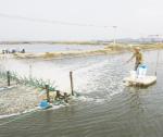 Quản lý sức khỏe thủy sản mùa lạnh