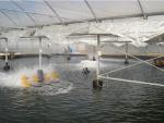 Qatar: Xây trại nuôi tôm siêu thâm canh