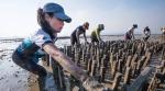 Hồng Kông: Phát triển bền vững nghề nuôi hàu có lịch sử 800 năm