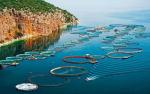 COVID-19 giáng đòn nặng vào nuôi trồng thủy sản Hy Lạp