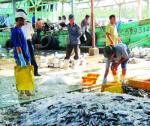 Bất cập nhân lực nghề cá