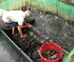 Biện pháp phòng và xử lý bệnh cho cá nuôi