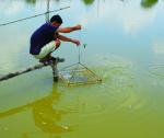 Một số biện pháp chống nóng cho thủy sản