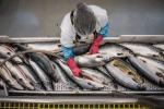 Diễn biến thị trường thủy sản trước đại dịch COVID-19