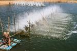 COVID-19 tác động đến ngành cá hồi, tôm thế nào?