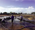 Giải pháp giảm chất thải ao nuôi tôm