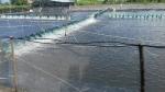 Trà Vinh: Phát triển thủy sản theo hướng hàng hóa chất lượng và hiệu quả