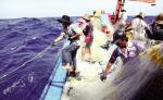 Quảng Bình: Để khai thác thủy sản hiệu quả hơn
