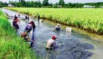 Bạc Liêu: Bền vững như nuôi tôm kết hợp tại Phước Long