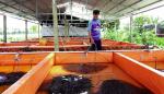 Lâm Đồng: Hiệu quả nhờ đa dạng loài nuôi