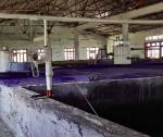 Thiết bị ổn định nhiệt độ nước biển nuôi tôm hùm trong bể