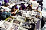 Tổn thất sau khai thác hải sản đến 20%
