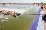 Chế phẩm sinh học xử lý nước bị nhiễm NH3