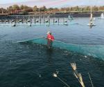 Giải pháp phòng bệnh trên thủy sản