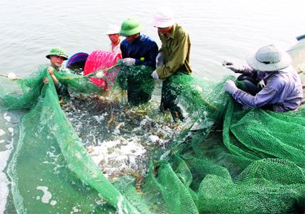 Grobest Việt Nam: Sát cánh với nông dân trong nuôi tôm bền vững