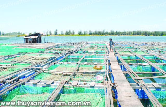 Đẩy mạnh nuôi cá bóp trong lồng bè ở Cà Mau