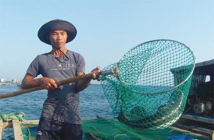 Ninh Thuận: Thu bạc triệu từ nuôi cá bớp trên biển
