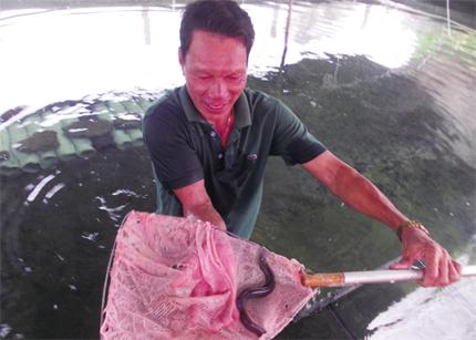 Quảng Nam: Hướng đi mới nuôi cá chình trong bể xi măng