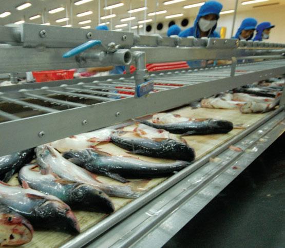 Giá trị cá tra ẩn giấu ở công nghệ