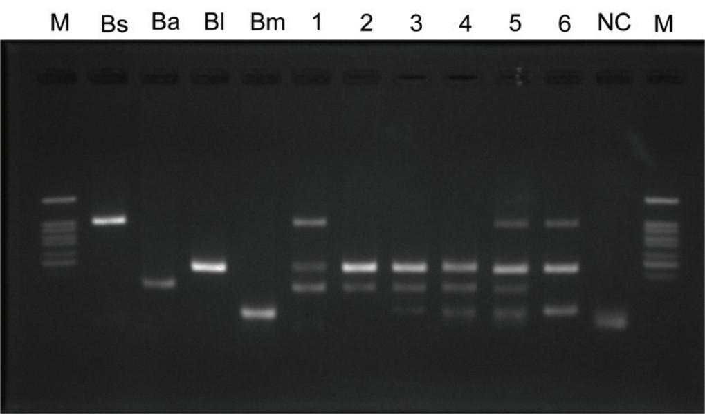 Giải pháp kiểm định chế phẩm vi sinh trong nuôi trồng thủy sản