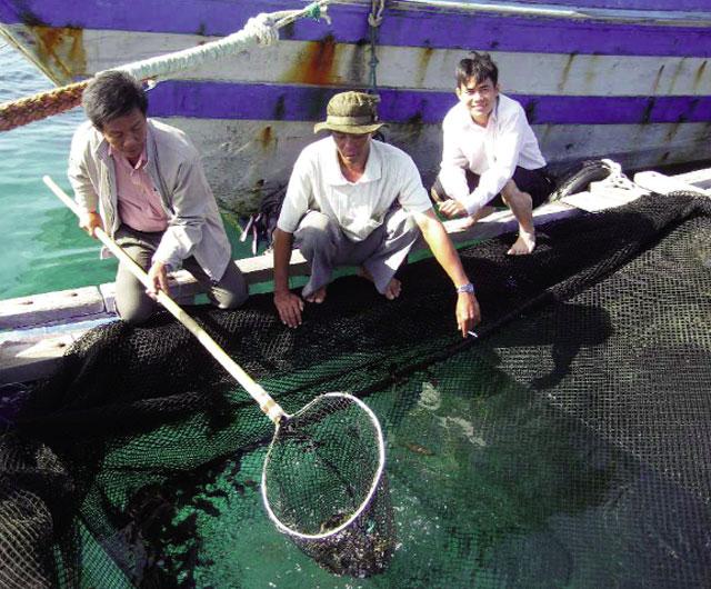 Kỹ thuật nuôi cá mú cọp trong hồ đá chắn và lồng bè