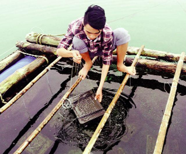 Kỹ thuật nuôi treo bào ngư trên biển