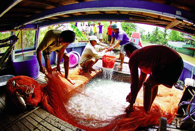 Khả quan chất lượng giống thủy sản