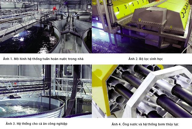 Thiết kế hệ thống tuần hoàn nước