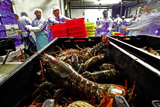Tương lai ảm đạm của ngành thủy sản Mỹ