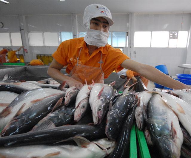 Xuất khẩu cá tra sẽ tăng đột biến