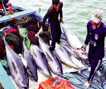 Nâng cao hiệu quả khai thác thủy sản