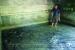 Giàu lên từ nuôi cá lóc bể xi măng