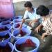 Sản xuất thành công giống lươn đồng bằng sinh sản bán nhân tạo