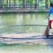 Stella S - Thức ăn viên nổi ép đùn hỗn hợp cho cá lóc