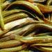 Tập tính ăn của cá chạch bùn