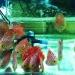 Công ty TNHH MTV Cá nhiệt đới Xanh Tươi: Khác biệt để bứt phá