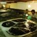 Ứng dụng Ozone trong nuôi trồng thủy sản