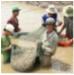 Bến Tre: Nhân rộng mô hình vùng nuôi tôm biển an toàn dịch bệnh ở An Đức