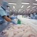 Nhìn nhận và đánh giá thị trường cá tra Việt Nam