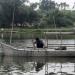 Quảng Trị: Phát triển nuôi cá lồng trên sông ở Hải Lăng