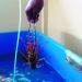 Quy trình nuôi tôm hùm bông trong bể